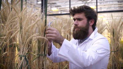 Video brings crops to life